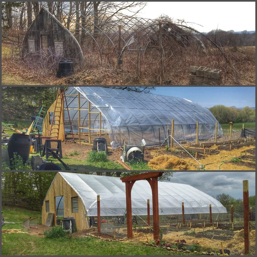 Greenhouse in transition.