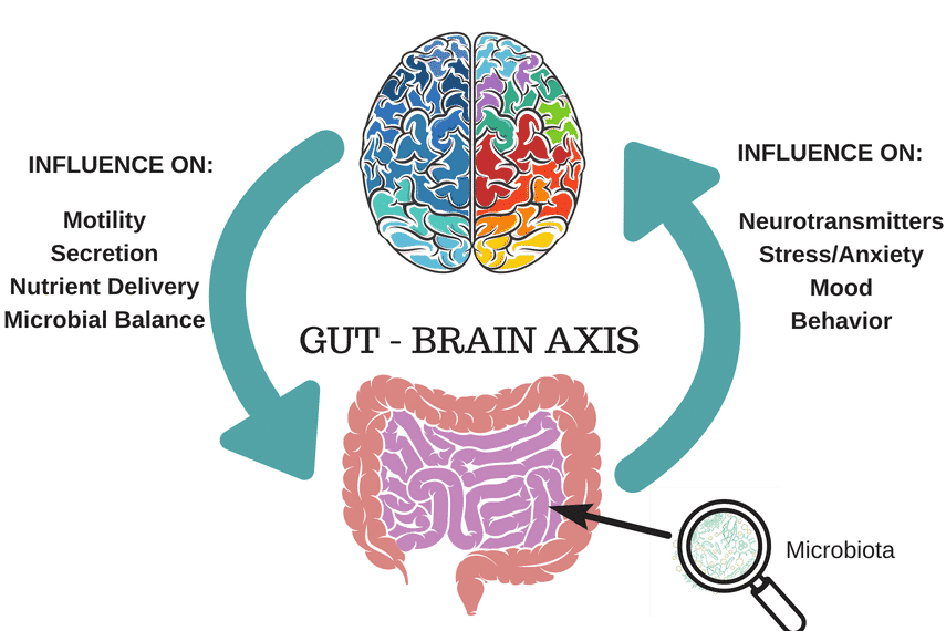 Graphic describing the gut-brain axis and its influence on functions such as motility and mood