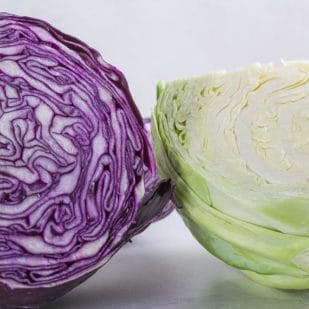 red cabbage and green cabbage, cut open on white backdrop